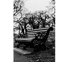 Bench with eaves dropping trees Photographic Print