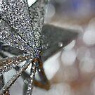 shiny star by Francesca Rizzo
