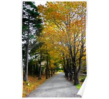 Fall in Point Pleasant Park Poster