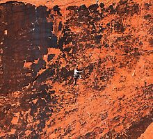 Climber in The Red Rock Canyon National Conservation Area. NV by Alex Preiss