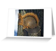 tail wrap Greeting Card