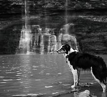 Border Collie at the Waterfall by ErinCrossman