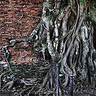 Buddha in tree by Robyn Lakeman