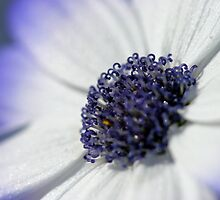 Flower 9 by squires