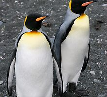 Penguin Duo 2 by squires