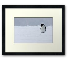 Solo Penguin 2 Framed Print