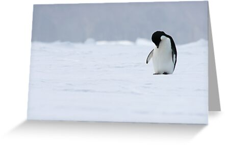 Solo Penguin 2 by squires