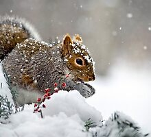 Snowy Squirrel by Christina Rollo