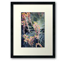 Echeveria #2 Framed Print