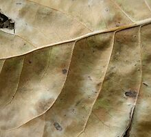Natural Camoflauge by Lynn Stratton