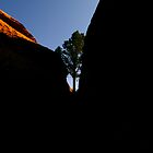 Lonely Tree - Moab, Utah by Dave Mortell