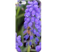 Grape Sugar iPhone Case/Skin
