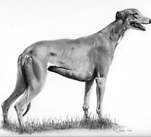 Greyhound by Karen Townsend