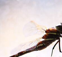 Dragonfly wings  by Selina Tour