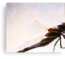 Dragonfly wings  Canvas Print