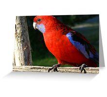 Crimson Rosella Marlo Vic. Greeting Card