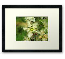 Brush box Flower Framed Print