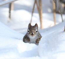 Is winter over yet? by Heather King