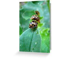 Lady Beetle Piggy Back (Issy age 5) Greeting Card