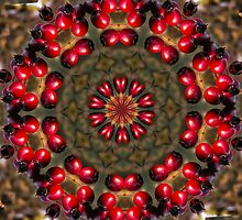 Christmas Berries by Jennie Anderson