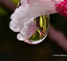Droplet by Jennie Anderson