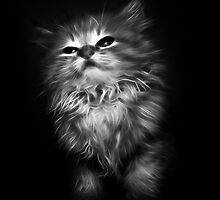 Kitten 2 by Mikhail Palinchak