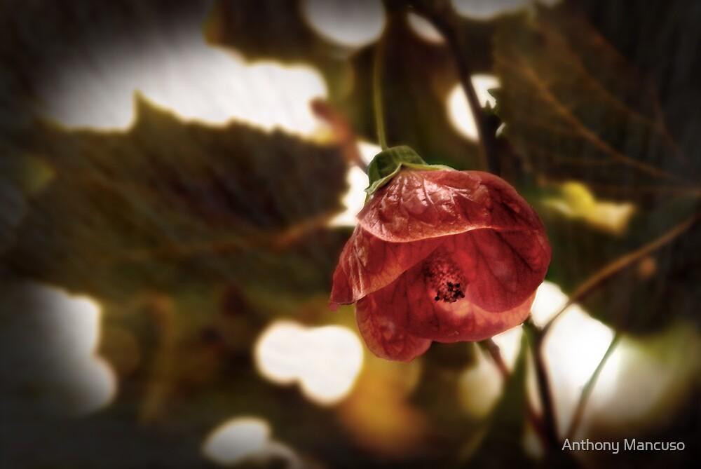 crimson friend by Anthony Mancuso