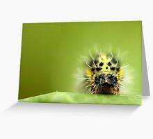 The Hungry Catapillar Greeting Card