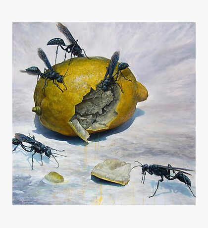 Lemon and Mud Daubers Photographic Print