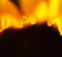 Sunflower Petals #2 by David Hawkins-Weeks