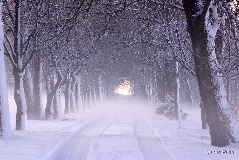Snowy Winter Alley in Park by Marko Palm