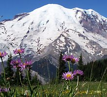 Wildflowers and Mount Rainier by KGMiller