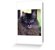 Mow Mow Greeting Card