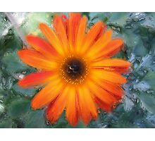 Gerbera 2 Photographic Print