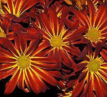 Intense Color by Bonnie T.  Barry