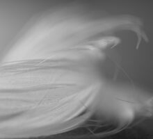 Feather Abstract #1 by David Hawkins-Weeks