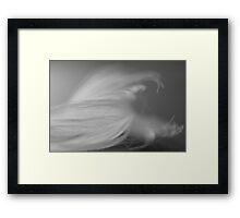 Feather Abstract #1 Framed Print