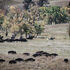 Buffalo Roundup 2 by mcstory