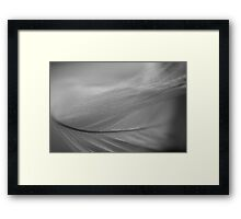 Feather Abstract #2 Framed Print