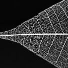 Leaf Skeleton #1 by David Hawkins-Weeks
