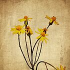Golden Ragwort - Textured by mcstory