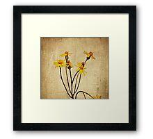 Golden Ragwort - Textured Framed Print