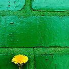 Dandelion Series Green by Eric Abernethy