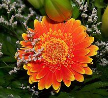 Orange2 by Carol Field
