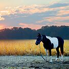 Sunset on the Field © by Mary Campbell