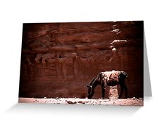 Jordan, Petra - Pack Donkey Greeting Card