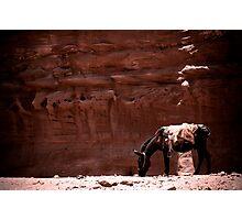 Jordan, Petra - Pack Donkey Photographic Print