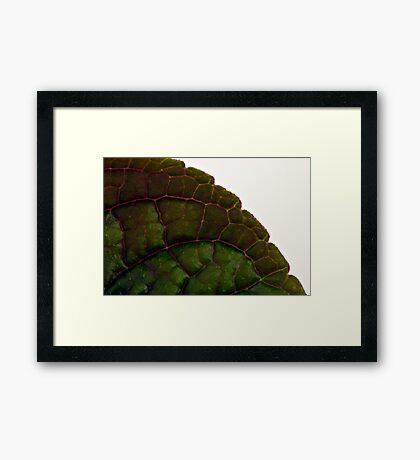 Plecanthrus Leaf Details - Macro  Framed Print