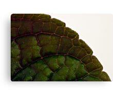 Plecanthrus Leaf Details - Macro  Canvas Print