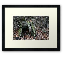 Hollow Stump Framed Print